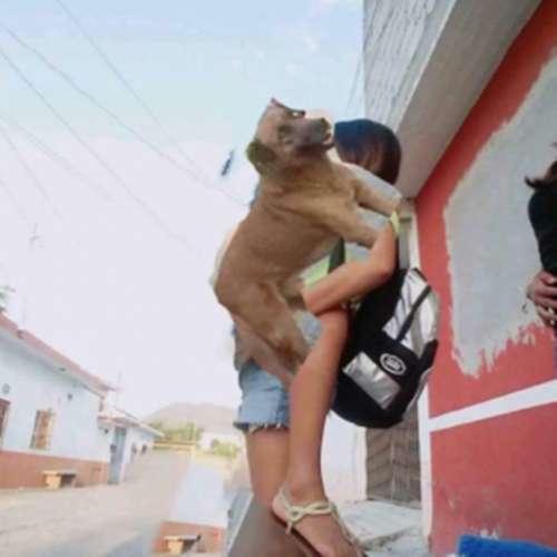 pedindo ajuda na internet pra tirar o cachorro da foto