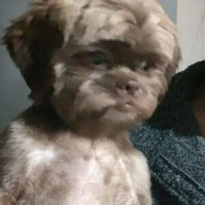 O curioso caso do cachorro que estava abatido e com outra aparência