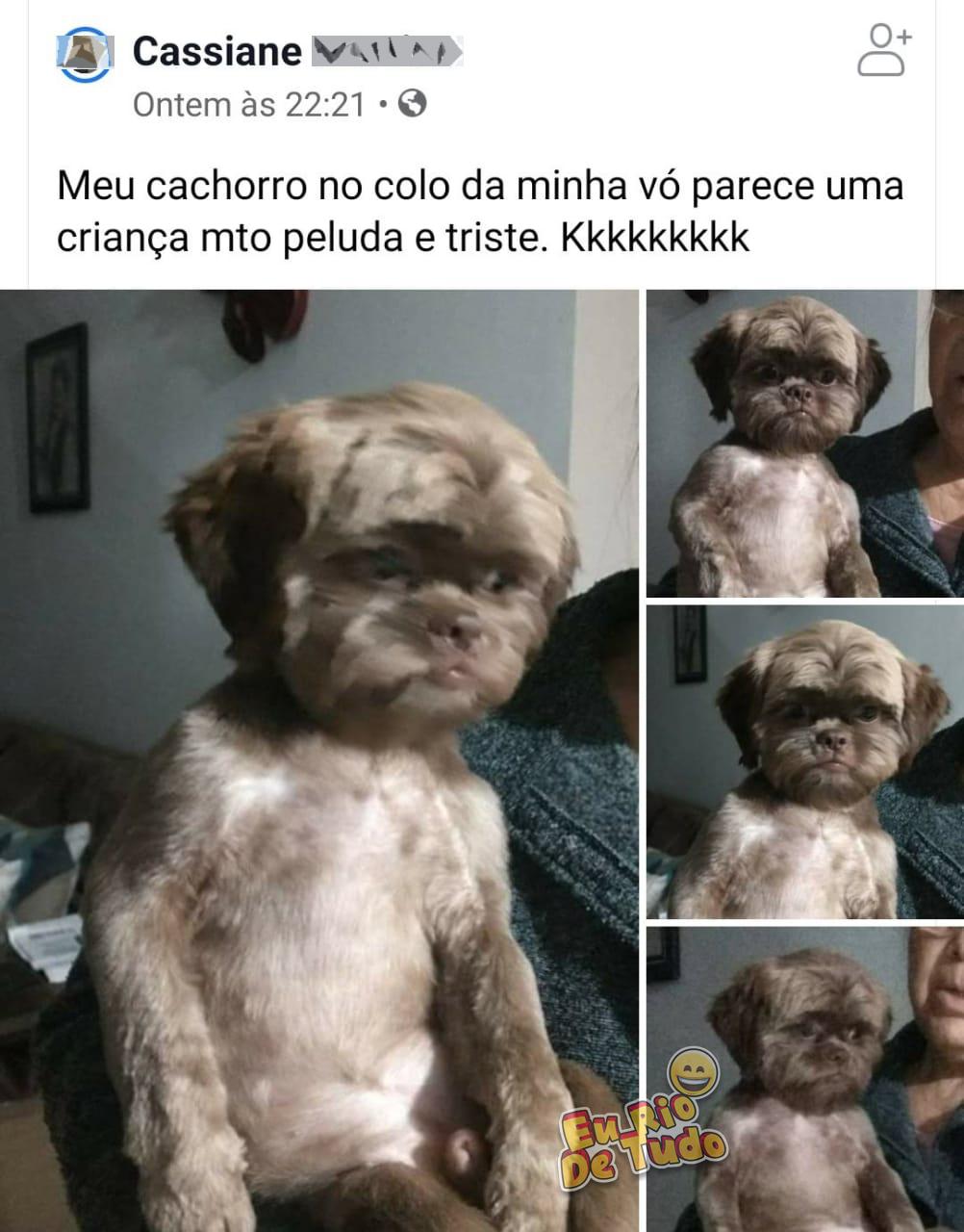 cachorro com depressão